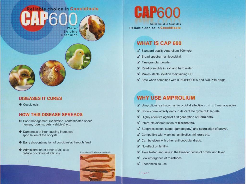 Cap 600 Back